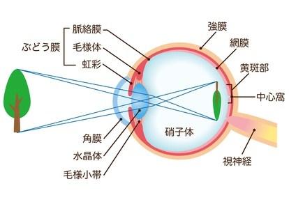 眼の仕組み